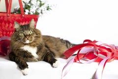 与红色丝带的虎斑猫 库存照片