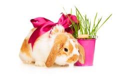 与红色丝绸弓的逗人喜爱的兔子在白色背景 库存照片