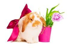 与红色丝绸弓的逗人喜爱的兔宝宝在桃红色罐附近 库存照片