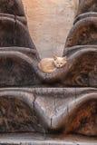 与红色兽皮的一只小的小猫在艺术品放置 免版税图库摄影