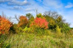 与红色叶子和蓝天的秋天树 免版税库存图片