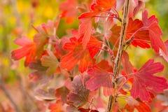 与红色叶子的一个小的结构树 库存图片
