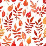 与红色叶子的传染媒介无缝的样式 免版税库存图片