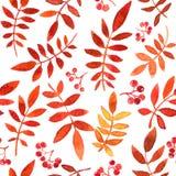 与红色叶子的传染媒介无缝的样式 免版税库存照片