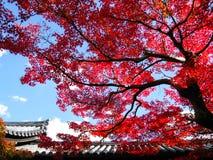 与红色叶子的大树在Tofukuji在京都 库存图片