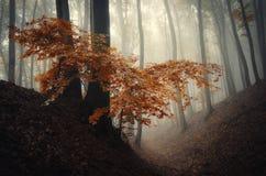 与红色叶子的树在秋天 免版税库存照片