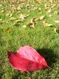 与红色叶子的秋天摄影 免版税图库摄影