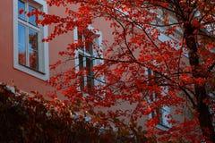 与红色叶子的秋天树 免版税库存照片