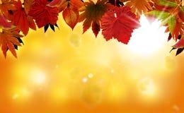 与红色叶子的秋天背景 库存照片