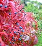 与红色叶子的花 库存照片