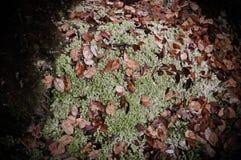与红色叶子的绿色泥炭藓 免版税库存图片