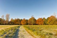 与红色和桔子叶子的秋天风景 蓝色清楚的天空 库存图片