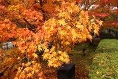 与红色和橘黄色叶子的秋天风景 免版税库存图片