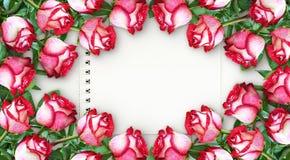 与红色和白色玫瑰的花卉框架开花 库存图片