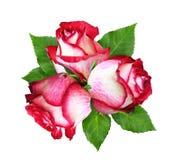 与红色和白色玫瑰花和叶子的花束 免版税库存图片