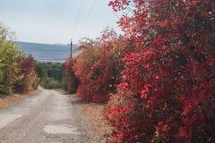 与红色和金黄叶子的灌木在阳光下 免版税库存图片