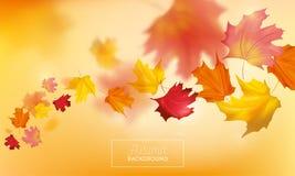 与红色和黄色槭树叶子的秋天背景 网横幅的,传单,销售自然秋天季节性设计模板 皇族释放例证
