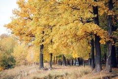 与红色和黄色的树在一秋天天离开 库存照片