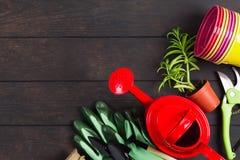 与红色喷壶、手套、多汁植物、pruner和五颜六色的罐的从事园艺的静物画概念在木背景 免版税库存图片