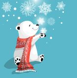 与红色围巾的美丽的矮小的逗人喜爱的北极熊在与雪花的蓝色bacjground 免版税库存图片