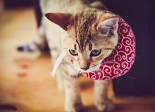 与红色围巾的逗人喜爱的猫 库存图片