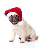 与红色圣诞老人帽子的哈巴狗小狗 背景查出的白色 库存图片