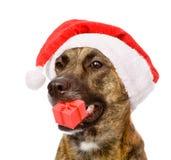 与红色圣诞节圣诞老人帽子和礼物盒的大狗 隔绝  免版税库存照片