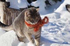 与红色圣诞节小珠的不可思议的猫 免版税图库摄影
