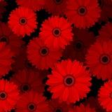 与红色大丁草花的无缝的样式。 免版税库存照片