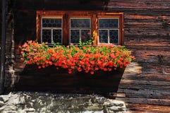 与红色大竺葵的瑞士日志瑞士山中的牧人小屋窗口开花 免版税库存图片