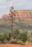 与红色岩层的偏僻的树在背景 免版税库存照片