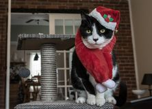与红色帽子和围巾的圣诞老人猫 免版税库存照片