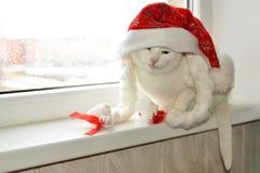 与红色帽子的白色猫 库存图片