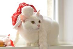 与红色帽子的白色猫 免版税库存照片