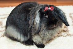 与红色弓的兔子 库存照片