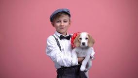 与红色弓,逗人喜爱的宠物,动物收养概念,礼物的公孩子藏品小狗 图库摄影