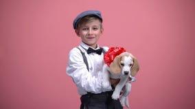 与红色弓,逗人喜爱的宠物,生日礼物的动物的逗人喜爱的男孩藏品小狗 库存照片