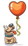 与红色心脏气球的牛头犬 免版税库存图片