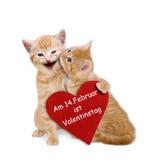 与红色心脏的两只被迷恋的猫在华伦泰 库存图片
