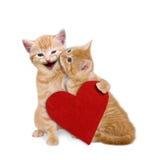 与红色心脏的两只被迷恋的猫在华伦泰 免版税库存照片