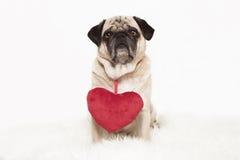 与红色心脏的哈巴狗 图库摄影