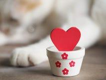 与红色心脏的情人节背景和白色猫在背景,爱和华伦泰概念中 免版税库存照片