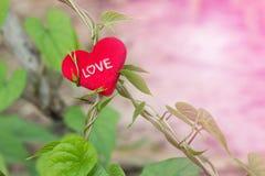 与红色心脏的绿色藤在情人节 库存照片