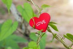 与红色心脏的绿色藤在情人节 免版税库存图片