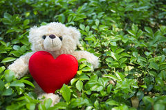 与红色心脏的逗人喜爱的玩具熊在绿草背景 免版税库存图片