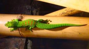 与红色斑点的绿蜥蜴 免版税库存图片
