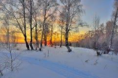 与红色日落的冬天风景在一个多雪的桦树森林里 免版税库存照片