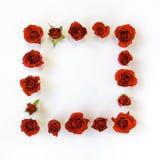 与红色明亮的玫瑰和叶子的装饰框架在白色背景 平的位置 库存照片