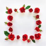 与红色明亮的玫瑰和叶子的装饰框架在白色背景 平的位置 免版税库存图片