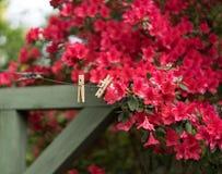 与红色杜娟花和葡萄酒C的软的俏丽的后院春天场面 库存照片